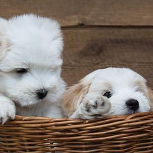 cuccioli-home